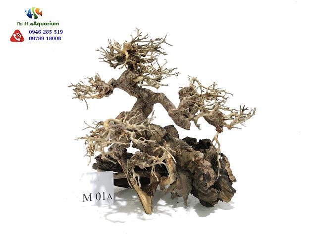Hình ảnh Lũa Thế bonsai M01A