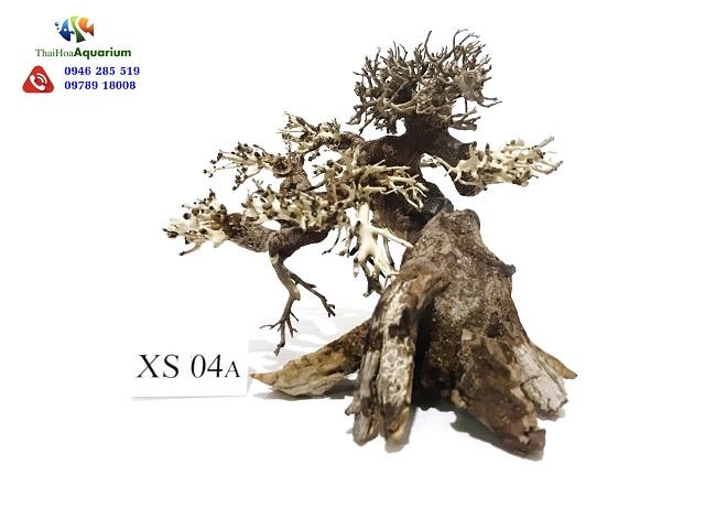 Hình ảnh Lũa bonsai XS04A