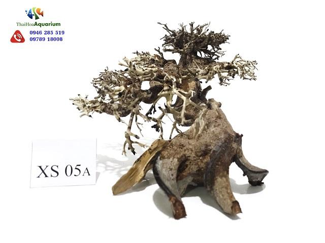 Hình ảnh Lũa bonsai XS05A