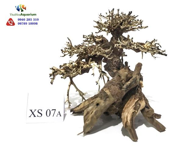 Hình ảnh Lũa bonsai XS07A
