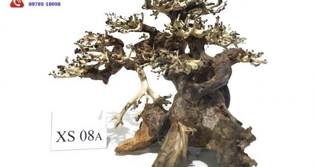 Hình ảnh Lũa bonsai XS08A