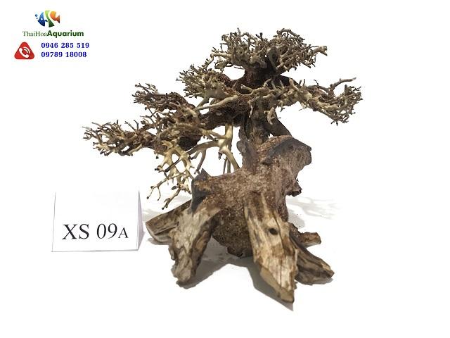 Hình ảnh Lũa bonsai XS09A