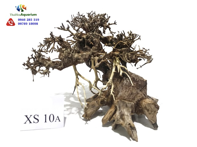Hình ảnh Lũa bonsai XS10A