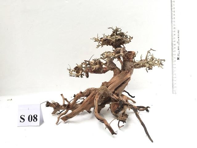 Hình ảnh lũa bonsai cho bể thủy sinh 40-90cm