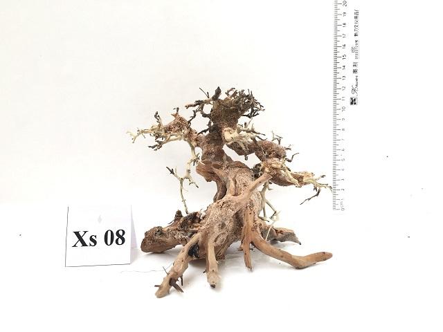 Hình ảnh lũa bonsai cho bể thủy sinh