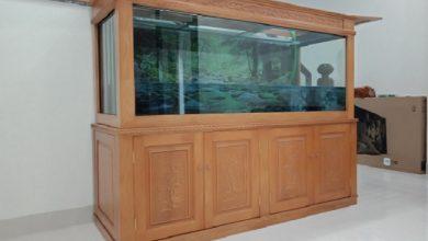 Hình ảnh Mẫu bể cá rồng mới tại Thái Hòa Aquarium