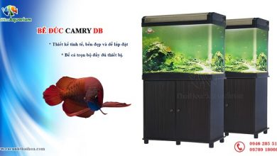 Photo of Bể đúc trung quốc Camry DB 60 – 80 – 100 – 120 – 150 – 180