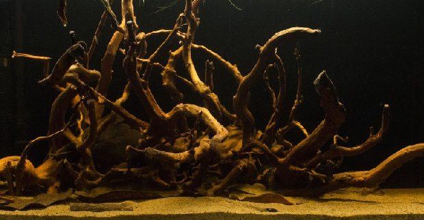 Hình ảnh Gỗ lũa phai màu ra nước bể cá