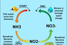 Photo of Hãy cảnh giác với Nitrate