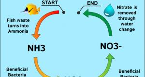 Hình ảnh Chu trình Nitrogen trong bể cá