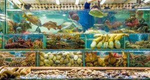 Hình ảnh Kinh nghiệm nuôi hải sản khoẻ mạnh