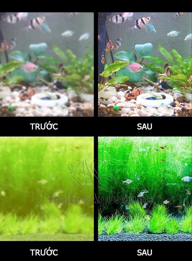 Hình ảnh Thích hợp cho bể cá cảnh - bể cá rồng - bể thuỷ sinh