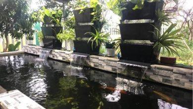 Photo of Hệ Thống Lọc Dàn Mưa Bakki Shower Cho Hồ Koi