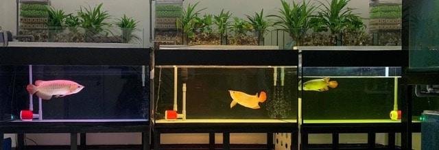 Hình ảnh Sử dụng cho nhiều loại bể - nhiều loại cá khác nhau